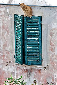 Una differente prospettiva | Flickr - Photo Sharing!