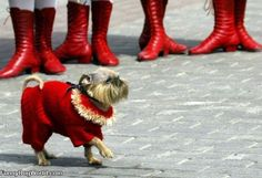 Look at this funny dog in his new sweater!