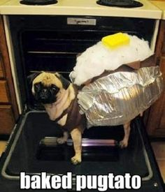 Baked Pugtato... oh I laughed so hard