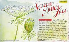 Tips on sketching & painting wildflowers along with identification tips…