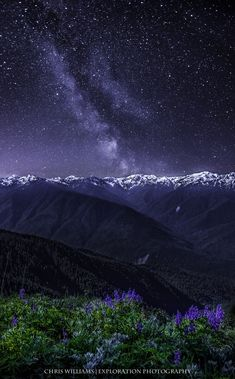 Wildflowers and the Milky Way over Hurricane Ridge, Olympic National Park, WA | 500px