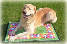 Education And Training, Stress And Anxiety, Your Pet, Pets, Animals, Animals And Pets, Animales, Animaux, Animal