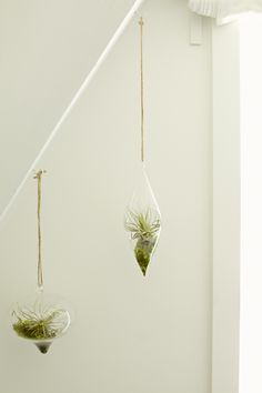 gorgeous hanging plants