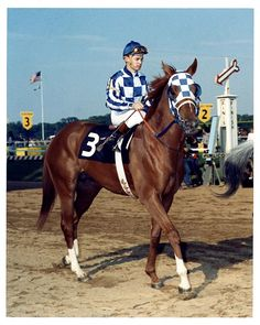 secretariat horse | It's (Finally) Official: 39 years after the fact, Secretariat sets ...