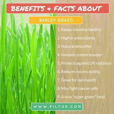 Filtur health, vitamin and supplement image section Super Green Food, Barley Grass, Immune System Boosters, Super Greens, Greens Recipe, Benefit, Vitamins, Cancer, Healthy