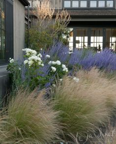 Moondance rose, Russian sage & Mexican feather grass via Le Jardinet Designs. Find an alternative to the invasive feather grass Back Gardens, Outdoor Gardens, Mexican Feather Grass, Front Yard Design, Xeriscaping, Garden Cottage, Sage Garden, Garden Grass, Garden Fences