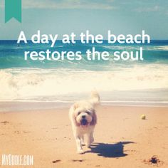 A day at the beach restores the soul. Cavapoo, Maltipoo, Goldendoodle, Dog Love, Puppy Love, Your Best Friend, Best Friends, Cockerpoo, Shih Poo