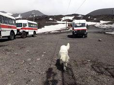 Off we go.  #etna #etnasud #volcano #volcanohike #volcanotour #activevulcano #craters #mountainlovers #mountain #outdoors #stepinsicily #szlakamisycylii #trailsofsicily #lava #hike #hikingtrail #trek #wulkan #krater #góry #natura #wycieczka #wakacje #przygoda #przyroda #natura #lawa #przewodnik #lovemyjob #dog