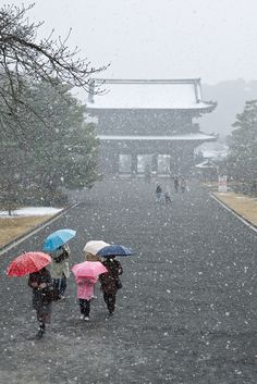 Umbrellas in the snow, color-coded - Winter scene at Ninna-ji temple, a few years back.