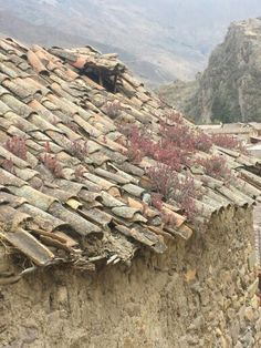 Blooms on the roof: Peru