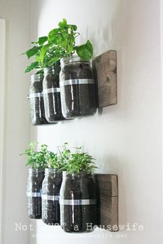 DIY wall hanging herbs garden in mason jars. Have fun growing an indoor herbs garden. More than 20 DIY ideas. Easy and cheap. Plus you will always have herbs to season your dishes. Mason Jars, Mason Jar Crafts, Mason Jar Planter, Glass Jars, Glass Containers, Container Gardening, Gardening Tips, Indoor Gardening, Herb Container