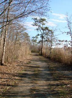 Path from arboretum
