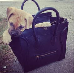 celine handbag mini - M Y A D D I C T I O N T O C E L I N E B A G S on Pinterest ...