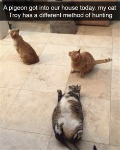 Top 30 Funny Animal Memes Of The Day