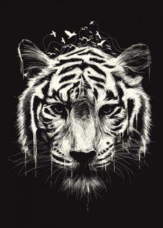tiger birds white stripes animal unique illustration