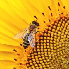 Vello en la barbilla en mujeres. Por qué de repente aparecen pelos en la cara. Bee, Animals, Bees, Insects, Women, Animais, Animales, Animaux, Animal