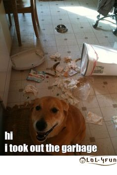 WTF Pictures, OMG Videos, LOL Quotes: Monthly Funny pictures | (April - Funny Dogs)