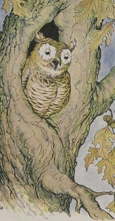 From 1919 Aesop Fable Children's book with adorable owl! Fairy Land, Fairy Tales, Wise Owl, Children's Book Illustration, Book Illustrations, Autumn Art, Owl Art, Childrens Books, Painting