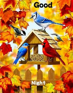 Carson Home Accents Bird Feeder Gathering Trends Classic Large Flag Good Night Pictures Images, Funny Good Night Images, Photos Of Good Night, Good Night To You, Cute Good Night, Nature Pictures, Holly Images, Good Morning Photos Download, Whatsapp Pictures