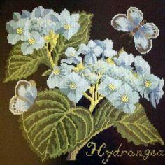 E.Bradley: Hydrangea