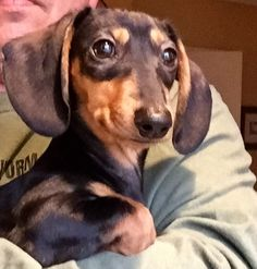 """""""5 month old Lucy looking at a backyard squirrel like she needs a playmate!!!!""""  Send us the cutest, most adorable picture of your dachshund here: http://dogdogs.xyz/dachshund-photo-gallery/"""