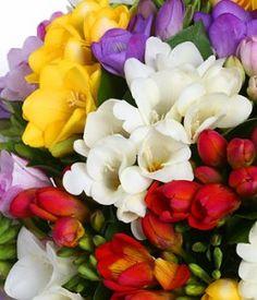 47 best flowers for spring weddings images on pinterest beautiful freesia flower mightylinksfo