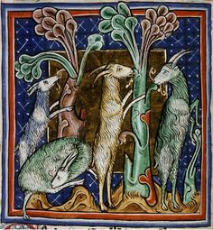 Medieval Bestiary : Goat Gallery