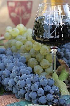 Grapes and wine Orcia DOC, Pinzi Pinzuti farm, Abbadia San Salvatore, Monte Amiata (Siennese Side) area, Tuscany, Italy