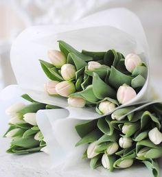Tulpen Halen