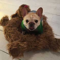 """""""Hi, I'm Walter, a French Bulldog, sitting on a dog bed, that's actually shaped like a dog...is that too weird?"""" #meta #fbf by thedailywalter ❤️❤️"""