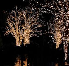 trees in twinkle lights