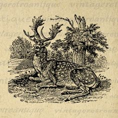 Digital Image Antique Deer Graphic Illustration Download