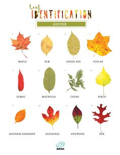 Leaf identification printable