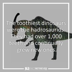 The hadrosaurids' teeth were also far more complex than human teeth Dinosaur Facts For Kids, Largest Dinosaur, Human Teeth, Prehistoric Creatures, Fun Crafts For Kids, Prehistory, Extinct, My Spirit Animal, Dinosaurs