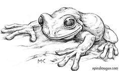 73 Untamed Animals Pencil Drawing Ideas - New Pencil Drawings Of Animals, Animal Sketches, Drawing Sketches, Art Drawings, Drawing Ideas, Frog Sketch, Frog Drawing, Frog Art, Sketchbook Inspiration