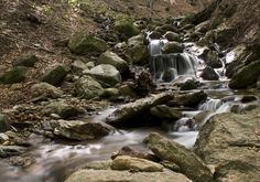 the creek in the woods - the creek in the woods creates small waterfalls