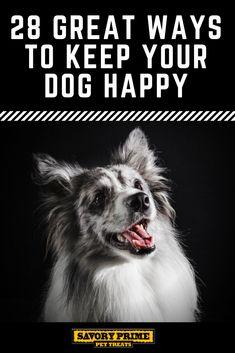 28 Great Ways to Keep Your Dog Happy Dog Training Tools, Training Your Dog, Dog Illnesses, Short Dog, Diy Dog Toys, Popular Dog Breeds, Loyal Dogs, Pet News, Dog Crafts