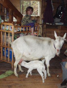 Northern Homesteader - This Alaskan Life