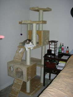 DIY cat climber. This is SO awesome!