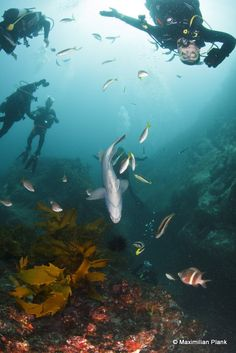 Lets Go Adventures – Dive Nelson Bay is a five star Padi instructional centre and offers various fun and safe courses.