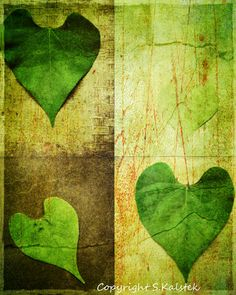 Vintage Hearts Photograph Green Leaf Hearts by KalstekPhotography, $30.00