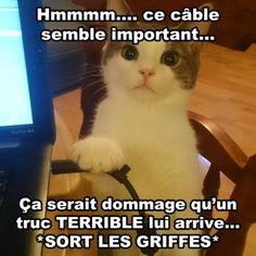 Québec Meme a les meilleures photos, derniers mèmes, trucs mignons, wtf, geek, photos drôles et cosplay du web. Québec Meme est votre meilleure source de bonheur. Découvrez Québec Meme maintenant!