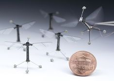 Tiny robotic insect takes flight
