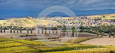 Panoramic landscape with vineyards and villages of Odratzheim and Scharrachbergheim on the Alsace wine route.
