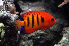 Fishes :: Etonnant Z Back