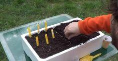 Por qué hago semilleros en lugar de sembrar desde hace mucho tiempo