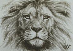 Výsledek obrázku pro lion drawing