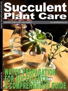 Jade Plant-Crassula Ovata Care, Propagation, Types and More - Succulent Plant Care Low Light Succulents, Flowering Succulents, Propagating Succulents, Growing Succulents, Succulent Gardening, Succulent Care, Cacti And Succulents, Cacti Garden, Gardening Tools