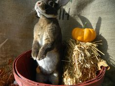 Bunny gets in on the fall spirit - October 24, 2013 - More at today's link: http://dailybunny.org/2013/10/24/bunny-gets-in-on-the-fall-spirit/ !
