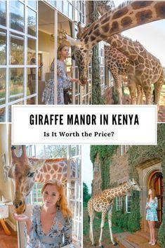 Giraffe Manor in Nairobi, Kenya - is it worth the price? | Anna Everywhere